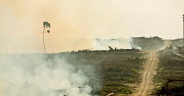 Palm oil : a decisive vote of the European Parliament